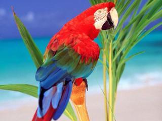 обои Лоро Парк - парк попугаев фото