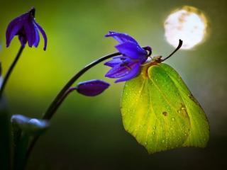 обои Зелёная бабочка в каплях фото