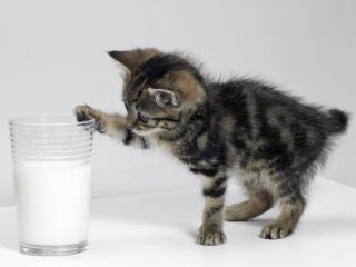 обои Малыш и молоко фото