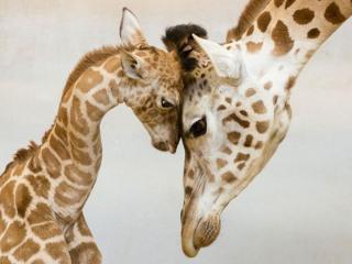 обои Мамочка любимая фото