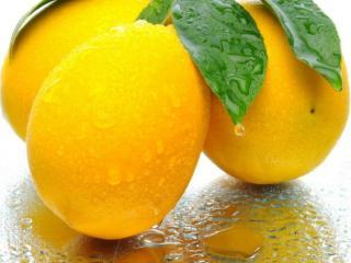 обои Плоды бергамота фото