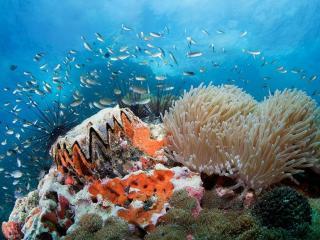 обои Рыбки и кораллы фото