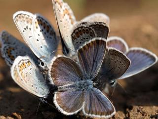 обои Группа бабочек фото