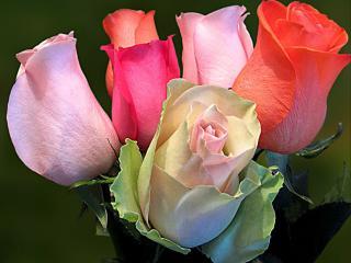 обои Многоцветный букет роз фото