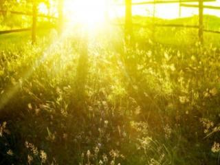 обои для рабочего стола: Солнечное летнее утро