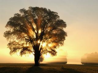 обои Утреннее солнце фото