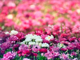 обои Цветочная полянка фото
