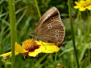 обои Бабочки,   цветочки - теплые денечки фото