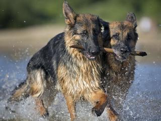 обои Вот оно собачье счастье фото