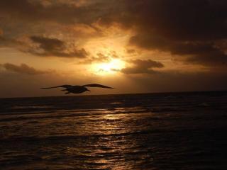 обои Чайка,   море и закат фото