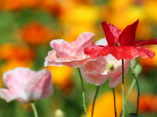 обои Яркое цветочное лето фото