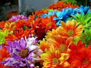 обои Цветочное лето фото