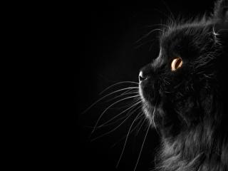 обои Настороженный взгляд черного котенка фото