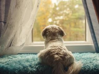 обои Собака смотрит в окно фото