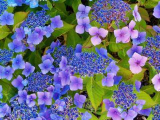 обои Нежные голубые цветы фото