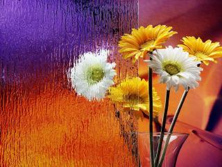 обои Цветы за рифленым стеклом фото