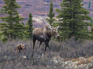 обои Дорогу осилит идущий! Аляска фото