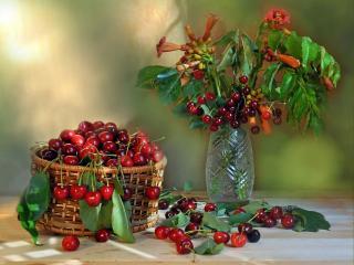 обои Вишня,   черешня,   цветы фото