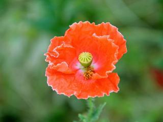 обои Волшебный аленький цветочек фото