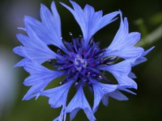 обои Сине-голубая нежность фото