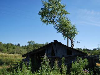 обои Старый дом у дерева фото