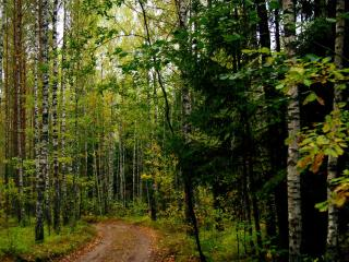 обои Дорога в грибном лесу фото