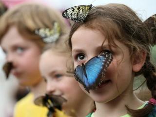 обои Бабочки и девочки фото