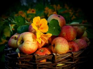 обои Яблоки в плетёной корзине фото