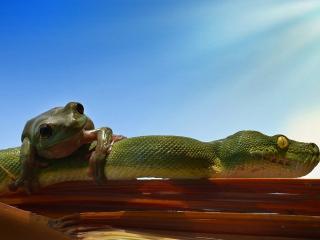 обои Лягушка и зеленый змей фото