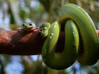 обои Два зеленых друга фото