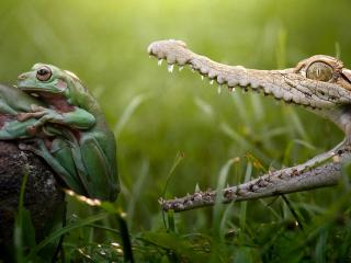 обои Лягушачий сендвич для алигатора фото