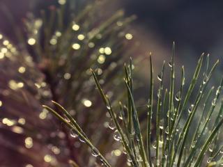 обои Ежик травы в каплях росы фото