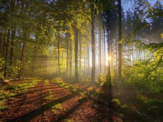 обои Дорога через лес. Карелия фото