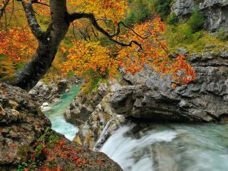 обои Осеннее дерево над горным ручьём фото
