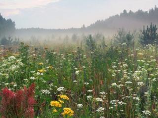 обои для рабочего стола: Утренний туман. Август