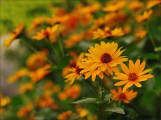 обои Цветы августа фото