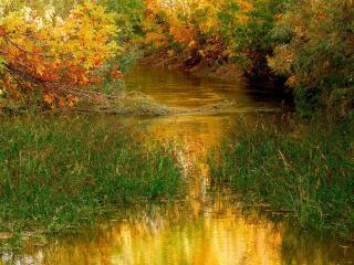 обои Ручей поросший травой фото