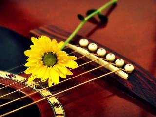 обои Желтый цветок на струнах фото