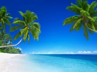 обои для рабочего стола: Пальмы склонились к океану