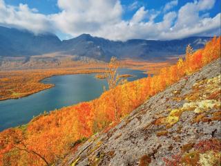 обои Золотая осень Заполярья фото