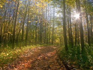 обои Дорога в осенних листьях фото