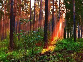 обои Луч солнца золотого фото