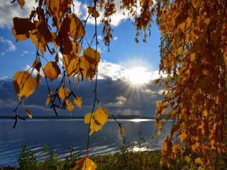 обои Осеннее утро фото