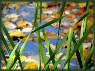 обои для рабочего стола: Осенний пруд