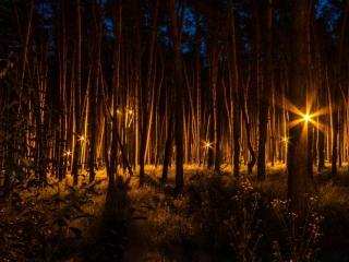 обои Таинственный лес фото