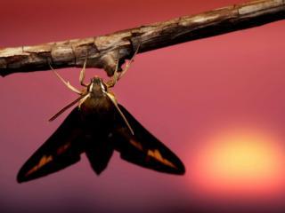 обои Бабочка на веточке фото