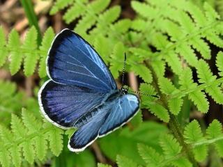 обои Бабочка на зелёном папоротнике фото