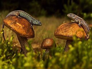 обои Ящерки на грибах фото