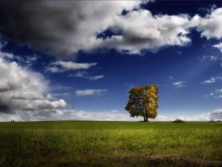 обои Одинокое дерево и облачное небо фото