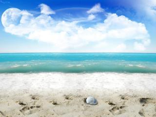 обои для рабочего стола: Ракушка и пляж
